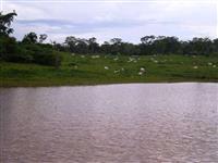 Linda fazenda em Minaçu com 1.038 alqueires Goianos