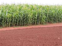 Fazenda para lavoura em Indiara, Go