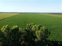 Fazenda de 1050 ha em Sapezal-MT