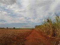 Linda Fazenda Uberaba MG 905 hectares