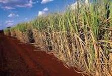Linda Fazenda Uberaba MG 6848 hectares