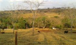 Linda Fazenda cruzeiro dos Peixoto 130 hectares