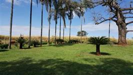 Linda Fazenda Tupaciguara 96 hectares