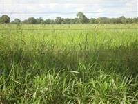 Linda fazenda Figueirópolis 3291 hectares