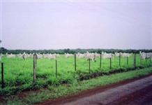 Linda Fazenda Pará