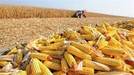 Comércio de milho