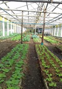 Aluguel de Estufa Agricola 1000 m²