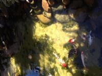 Filtros biológico para lagos artificiais
