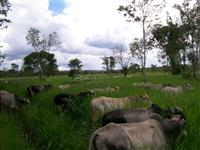 Fazenda Canabrava