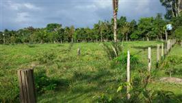 Fazenda 500ha no Pará a 50km de Belém