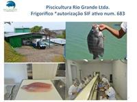 Frigorífico montado para  beneficiamento de pescado - Tilápia