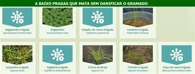 Herbicida 10 gramas para acabar com as Tiriricas em Gramados
