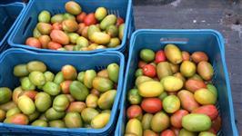 Comércio de Legumes