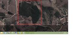 Terreno com 14 alqueires com plantação de 50.000 pés de Eucalipto