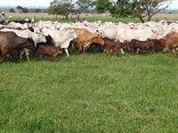 Credito rural e aporte capital com taxa de 0,11% ao mês