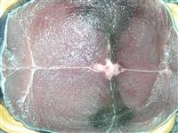 atum fresco ou congelado pruduto de primeira qualidade  do rio grande do norte
