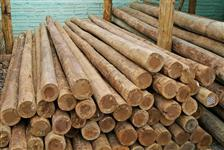 vende se madeira de eucalipdo poste 10 x 12 mm  8x10 mm