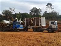 Compro Eucaliptos e Pinus  Toda Região de São Paulo e Interior