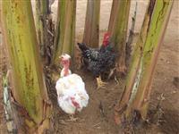 Chácara em Brazlandia Rodeador Morada dos Pássaros Condomínio fechado