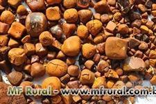 Compro Pedra de Fel (Calculo Bovino)