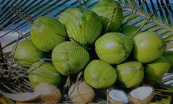 Venda de coco