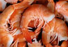 Camarão de Alta Qualidade, temos camarão de 8 a 12 gramas , excelente preço !