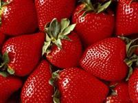Morango sensação para clima Brasil sementes fruta para mudas!!