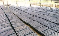 Tubetes e bandejas de plástico usados para produção de mudas