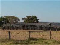 Fazenda em Torixoréu- MT de 1.602 ha