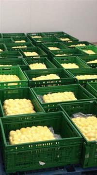 Batatas Trevisan