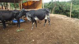 Venda de gado