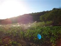 Fazenda Jurema / Tucano-Bahia