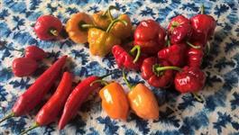Molho de pimenta / pimenta em conserva