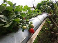 Agroindústria de Conservas e Doce de Frutas
