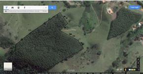 Plantação de 13000 pés de Eucaliptos grandis e saligna com 6 anos em Jambeiro-SP