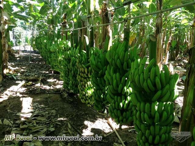 Venda e Instalação de Cabo Aéreo para Transporte de Banana e Insumos