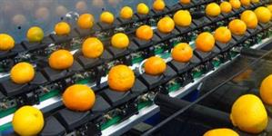 Classificador / Calibrador Eletrônico para frutas