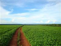 Compre já sua fazenda sem juros,  através da carta de crédito!