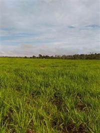 Fazenda em Balsas/MA - Agricultura ou Pecuária