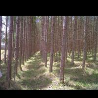 Fazenda com floresta de eucalipto