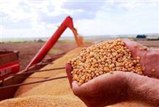 Vendemos milho e soja em grande quantidades