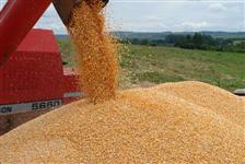 Compro Soja GMO Milho para exportação em MT GO BA MS
