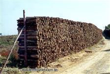 vendo lenha cortada e empilhada na estrada de eucalipto