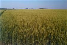 Fazenda com 1080 hectares em São Borja