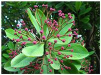 Mudas de plantas  diversas