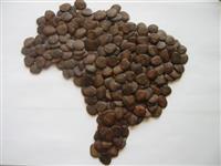 Compra sementes de Pau Brasil