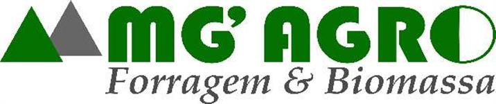 QUALITY CORN FORAGE / SILAGEM DE MILHO - BY MG
