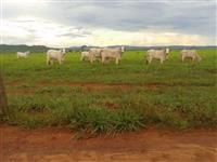 Fazenda PA