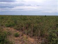 Fazenda Sul do Piauí