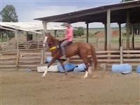 cavalo quarto milha